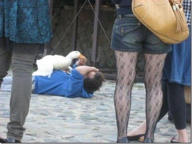 aa naooo tira esse pato daqui